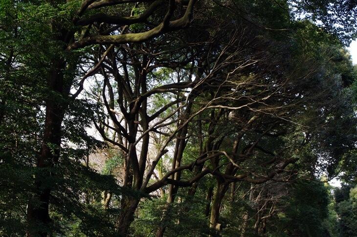 明治神宮の森 (2)