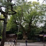熱田神宮の樹齢千年を超える弘法大師お手植えの大楠