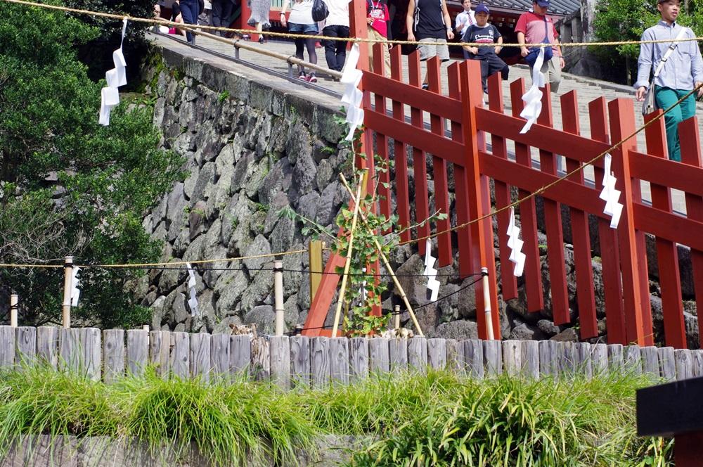 鎌倉 鶴岡八幡宮大銀杏 (2)