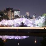 激闘!千鳥ヶ淵の夜桜リベンジ撮影、でもやっぱり惨敗 orz