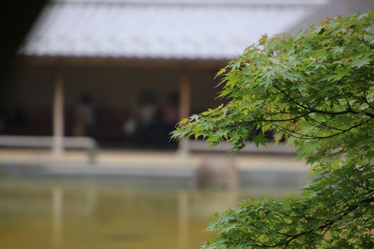 東京ミッドタウン 港区立檜町公園 tokyo midtwon hinokichopark (3)