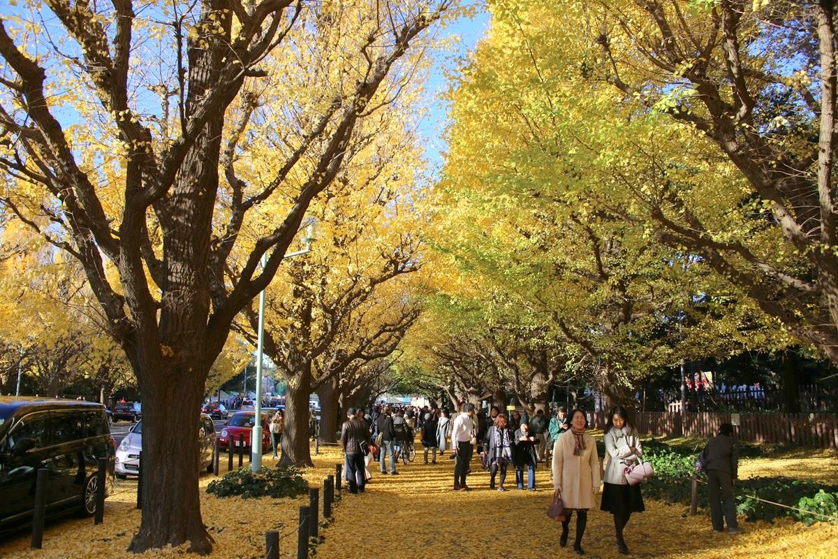 外苑 銀杏並木 gaien_ichonamiki