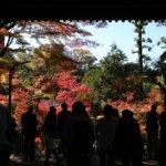 孤独の巡礼 北鎌倉の円覚寺の紅葉続編