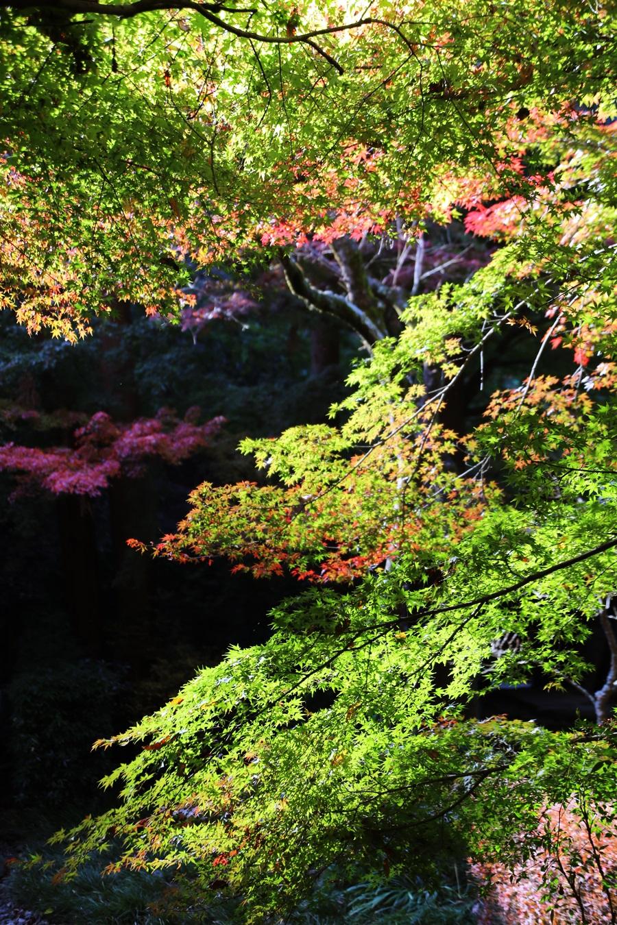 丸窓の北鎌倉 明月院 kitakamakura_meigetuin (13)