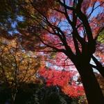実は穴場かもな旧江戸城跡地の紅葉。