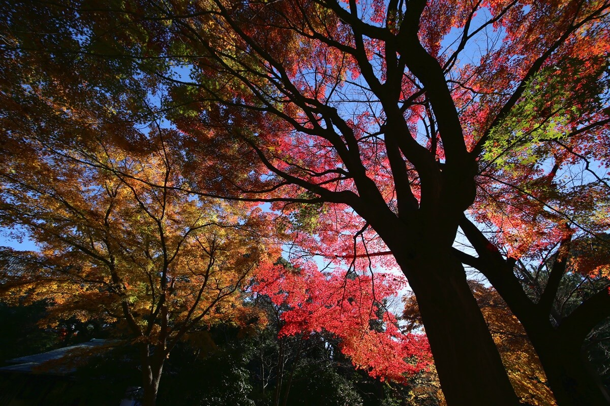 旧江戸城跡地の紅葉 kokyo_koyo (2)