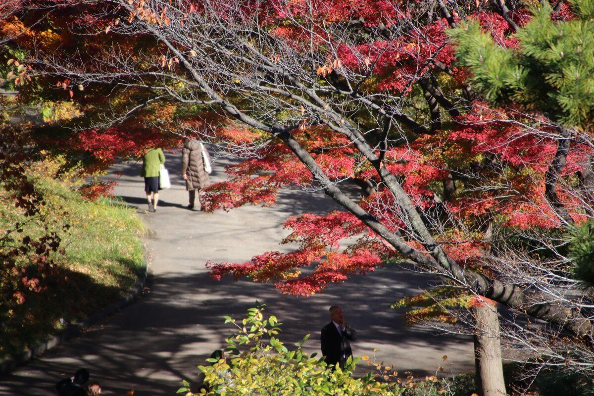 旧江戸城跡地の紅葉 kokyo_koyo (7)