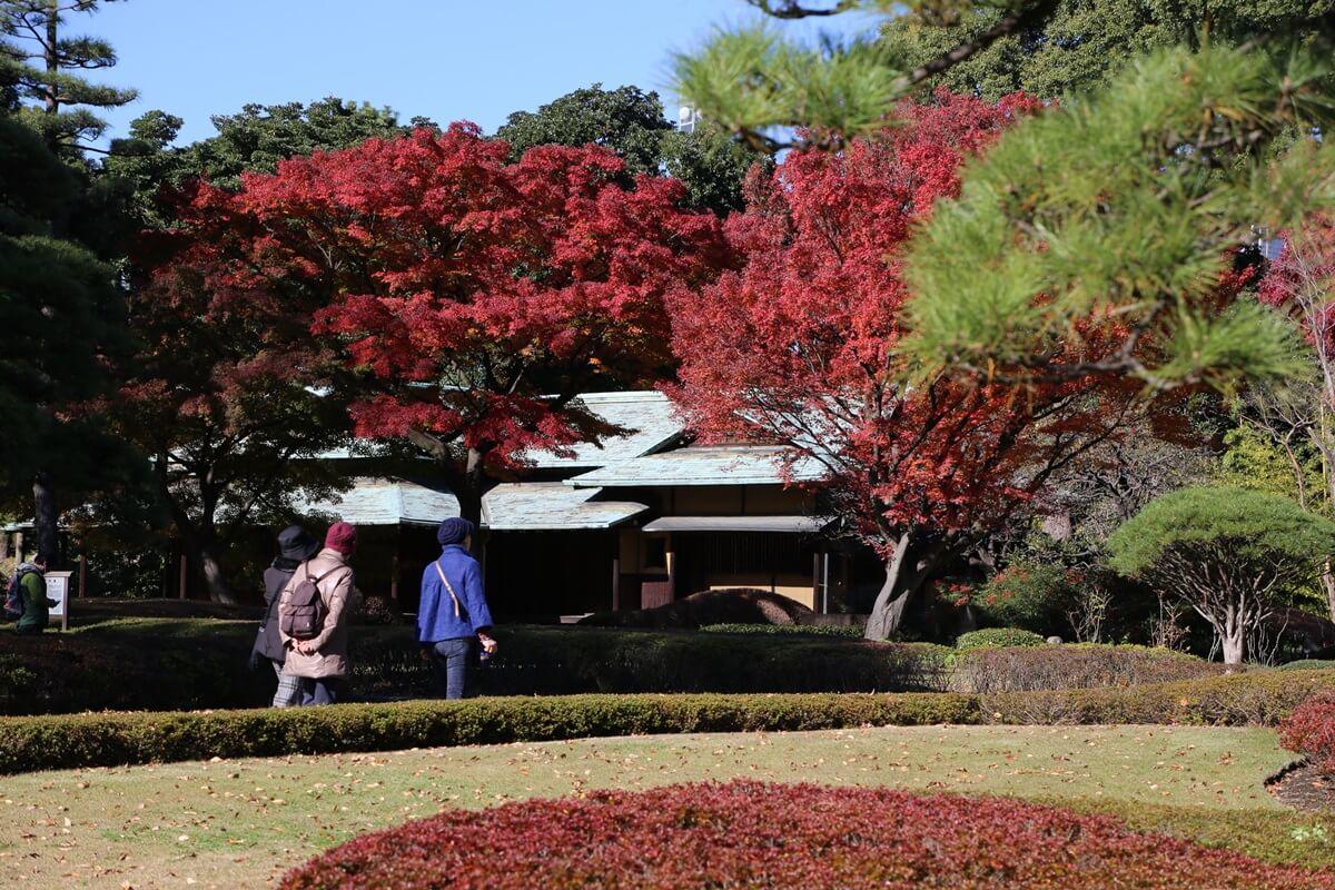 諏訪の茶屋 旧江戸城跡地の紅葉 kokyo_koyo (8)