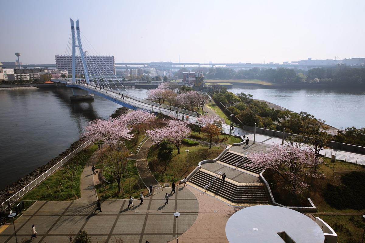 辰巳桜橋の桜 tasumisakurabashi (1)