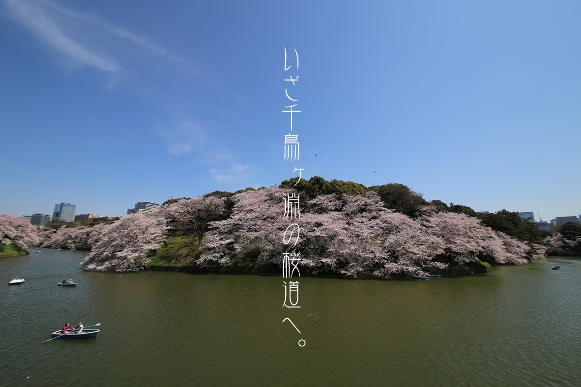 ボートハウス展望台 千鳥ヶ淵 桜 chidorigabuchi_Cherry Blossom (11)