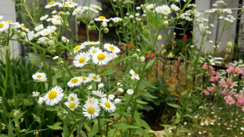 母の育てた花たち