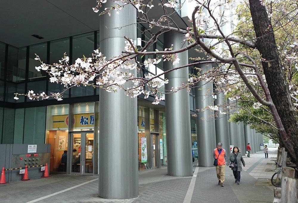 matsuya 松屋豊洲店