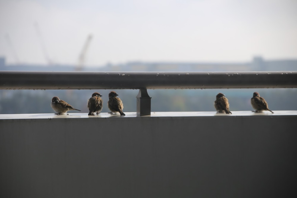 ベランダの鳥フン対策はテグスで解決。