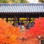 京都の旅 vol.1 紅葉の東福寺。