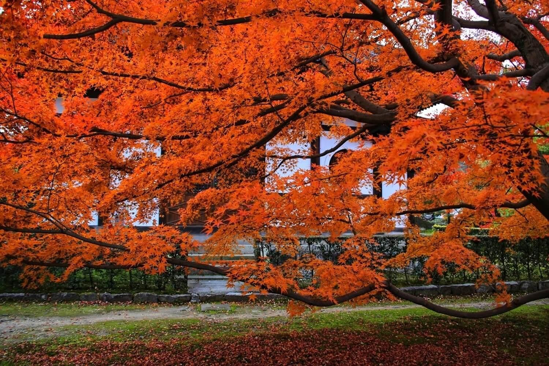 紅葉 京都五山第4位の東福寺