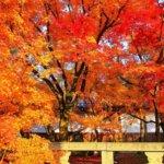 京都の旅 vol.8 永観堂は燃えているか。
