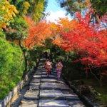 京都の旅 vol.5 美・高台寺 & 圓徳院 。