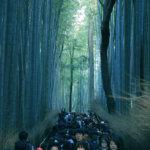 2018 京都の旅 vol.8 竹林の道と嵐山。