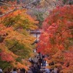 2018 京都の旅 vol.5 二尊院。