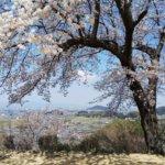 2019 奈良・飛鳥の旅 vol.5 大和三山。